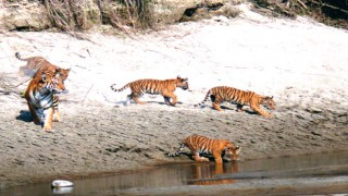 Bardia National Park Wildlife Tour
